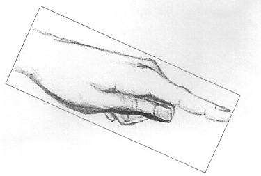 disegno di Carlotta Pederzani