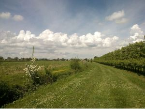 campi della pianura mantovana