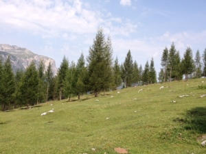 Un alpeggio sotto la Varella - San Cassiano (foto personale)